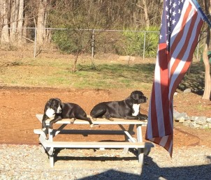 Romm and Remus on Guard From The Picnic Table.