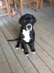 Remus as Puppy (Runt)