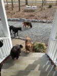 Samatha, Dustie, Zachary, and Remus